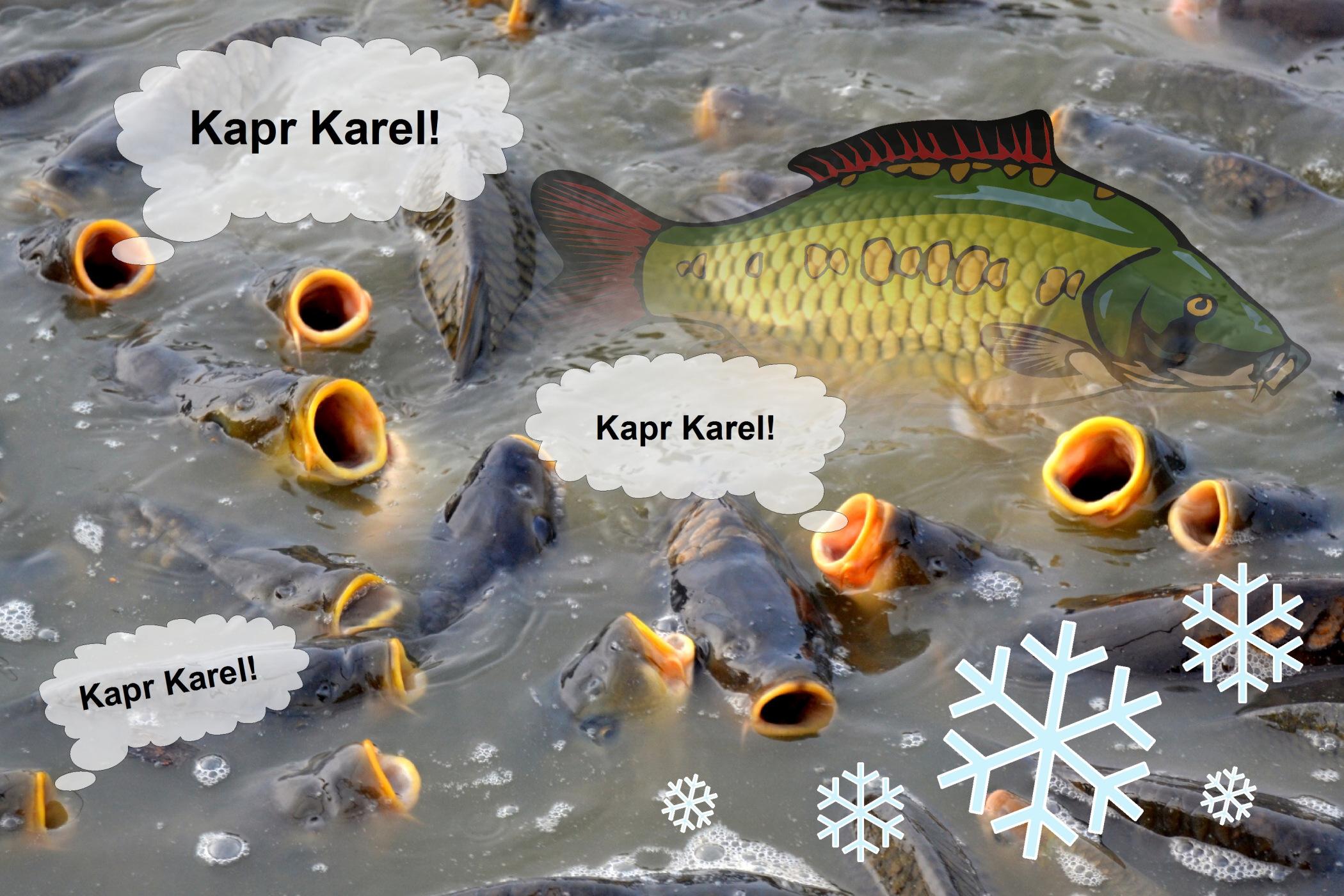 Kapr Karel 2014 - soutěž o vánočního kapra!