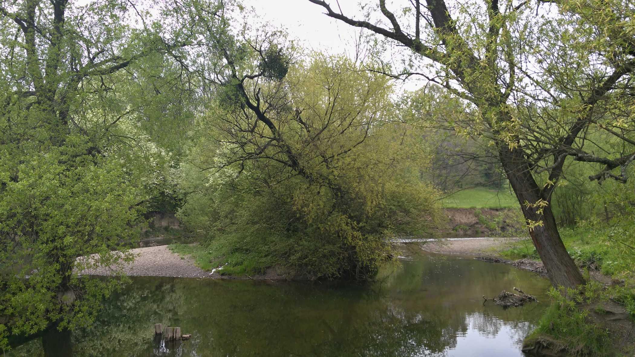 Zátočina s podemletým stromem