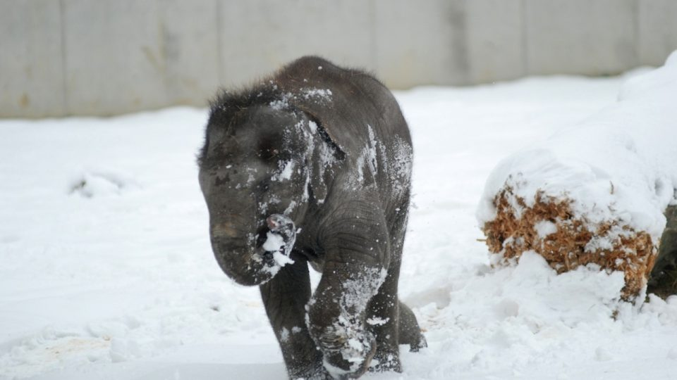 Rashmi na sněhu