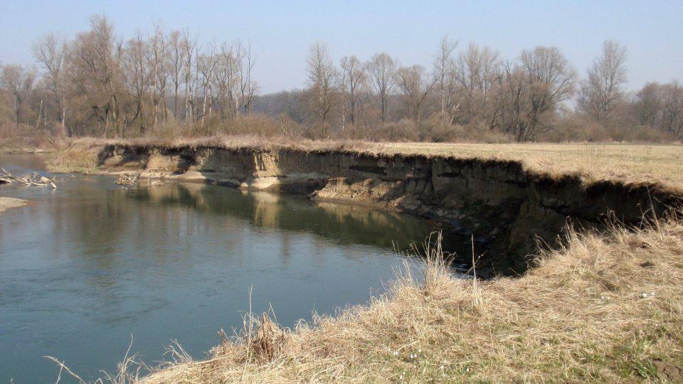 Meandrující řeka Odra v Proskovicích