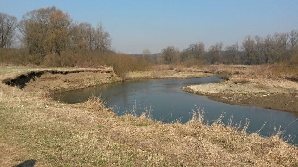 Meandry řeky Odry u Proskovic