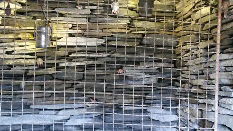 Expozice s netopýry