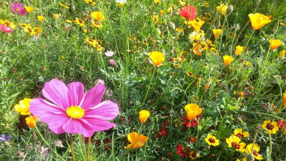 Květinová louka v Bruntále