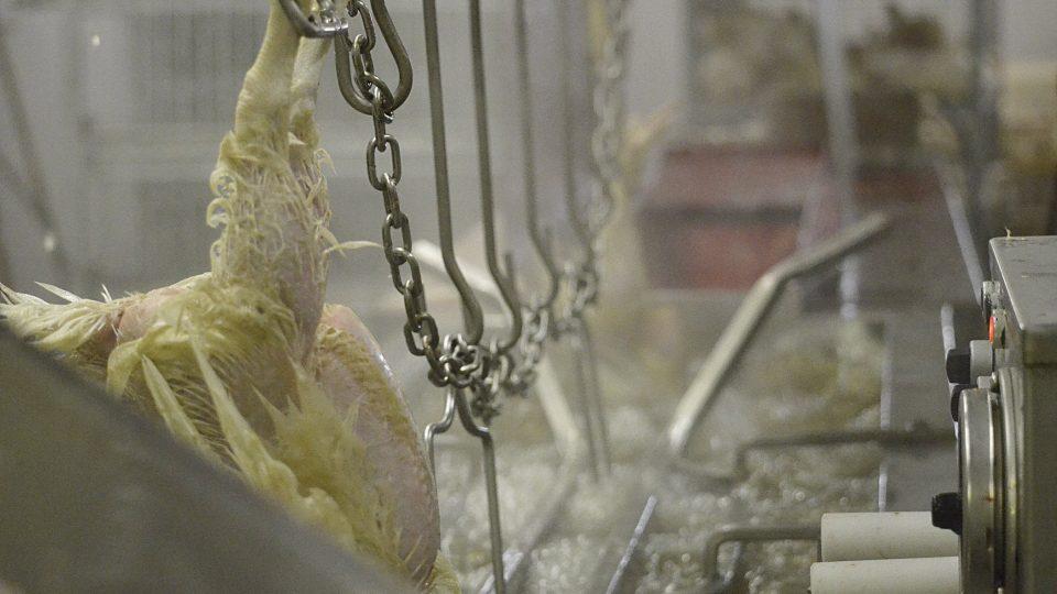 Linka na zpracování kuřat