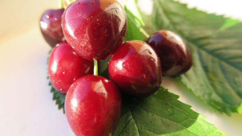 Chuť plodů Mšenské Jánovky je sladce kořenitá.