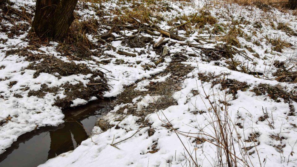 Zbytek bobří hráze na kanále u Nové Horky