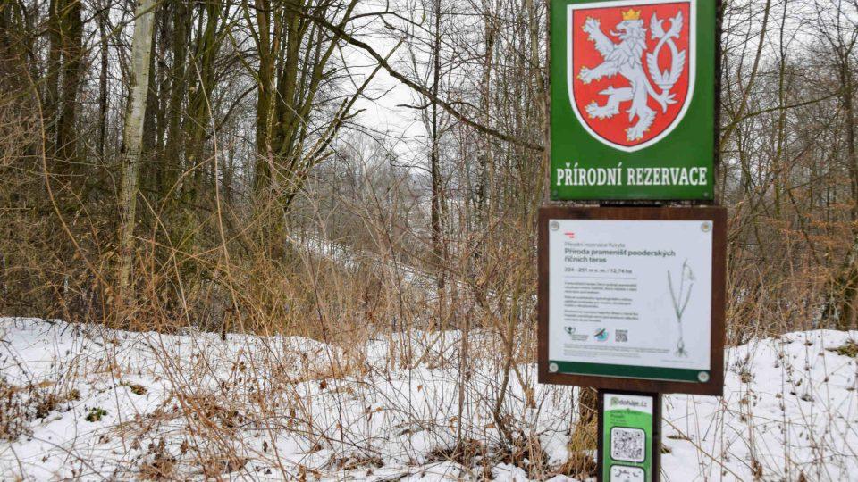 V přírodní rezervaci Koryta žije několik bobřích rodin