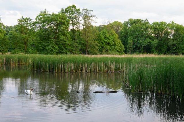 Jeden z mnoha rybníků v Poodří   foto: Michal Polášek