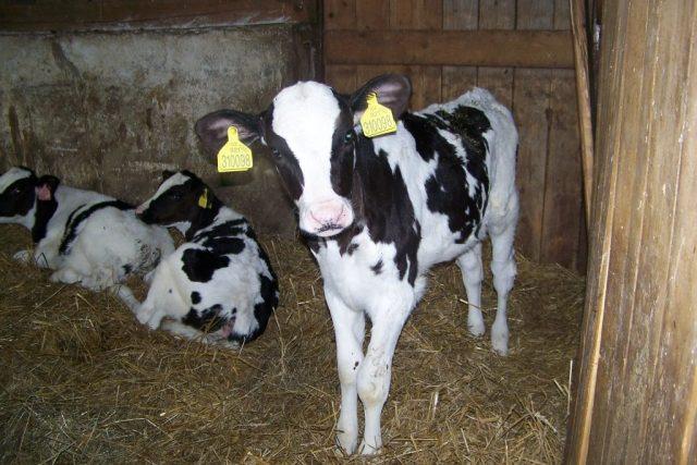 Rodinná farma Jiřetice na Benešovsku