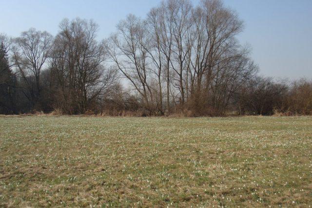 Sněženky. Proskovice, Odra u soutoku s Ondřejnicí