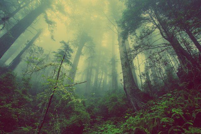 Podzimní tajemný les (ilustrační foto)