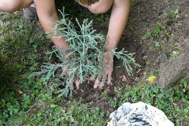 Zahrada, zahrádkaření, sázení. Ilustrační foto
