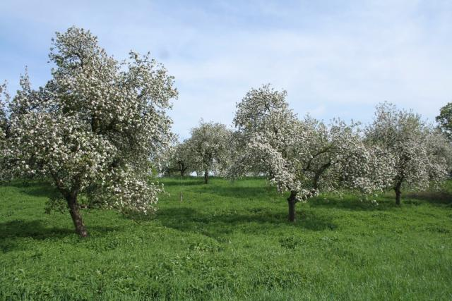 Bartošovický sad v květu na jaře