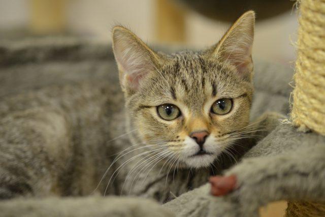 Kočička z útulku může být vánočním dárkem, ideální je, když si obdarovaný sám vybere