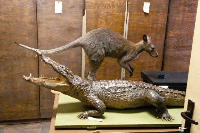 Krokodýl s klokanem. Příbuzní jen podle abecedy
