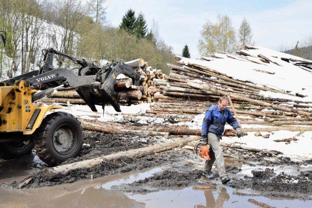 Lesnické firmy zpracovávají velké množství kůrovcového dřeva