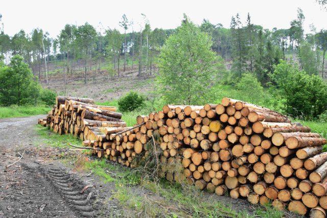 Skládka kůrovcového dřeva u svahu poblíž Nových Heřminov