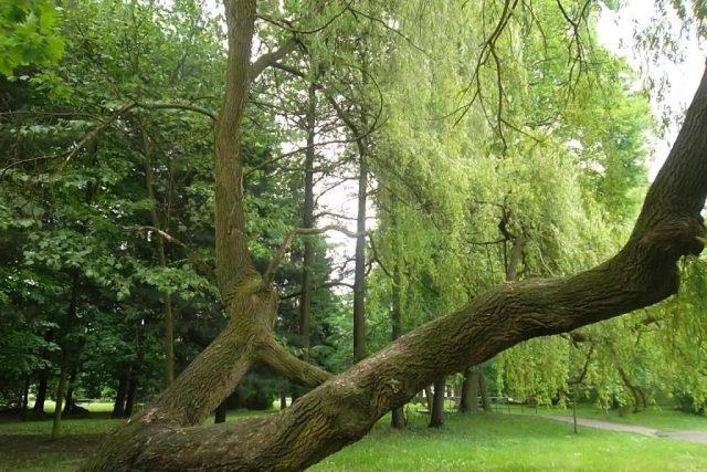 Zámecký park v Karviné | foto: Naďa Čvančarová,  Český rozhlas