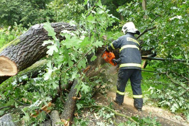 Hasiči odstraňují stromy popadané kvůli vichřici (ilustrační foto)
