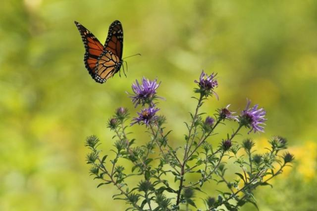 Motýl na louce | foto:  Foter,  CC0 1.0