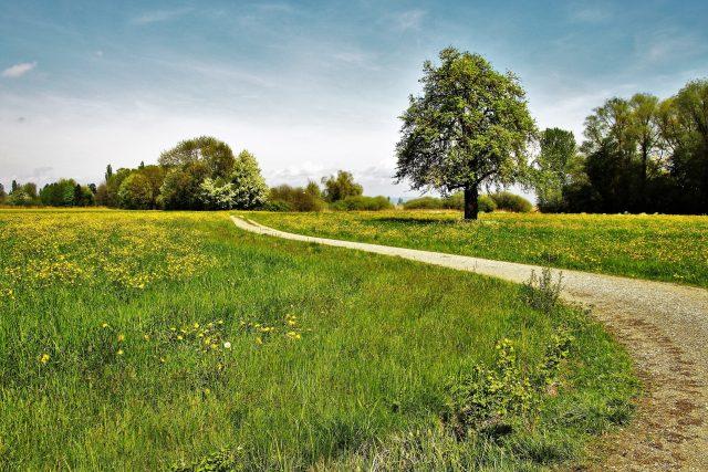 Krajina, polní cesta