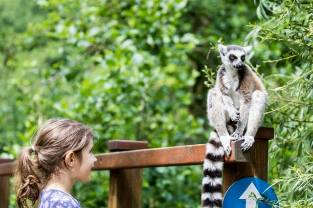 Ráj lemurů v Zoo Ostrava
