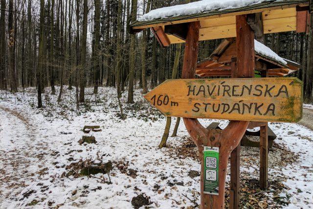 Les u Libotína je plný hald a děr po těžbě železa | foto: Michal Polášek