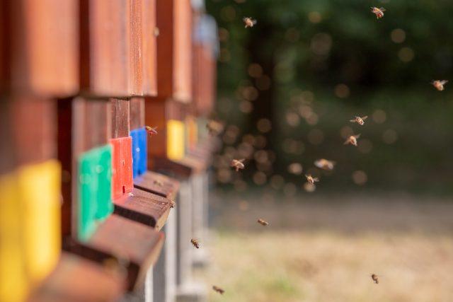 Včelí úly | foto: Josef Růžička