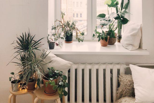 Byt - pokojové květiny - domov