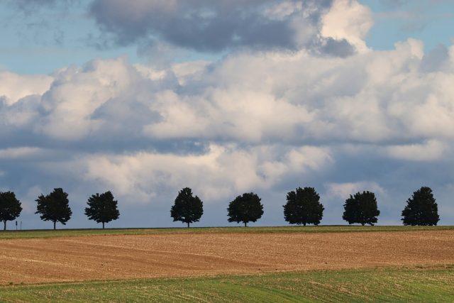 Stromořadí (ilustr. foto)