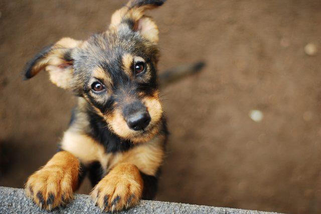 Štěně | foto: Shutterstock