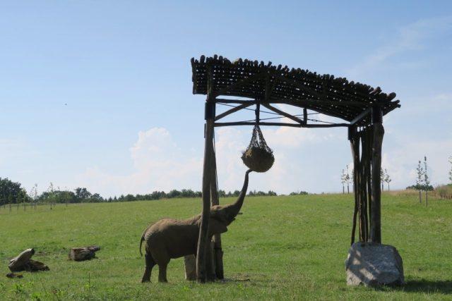 Zoologické zahrady se během covidu ocitly ve velkých finančních problémech.