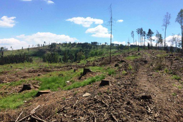 Rozpad smrkových lesů na severní Moravě