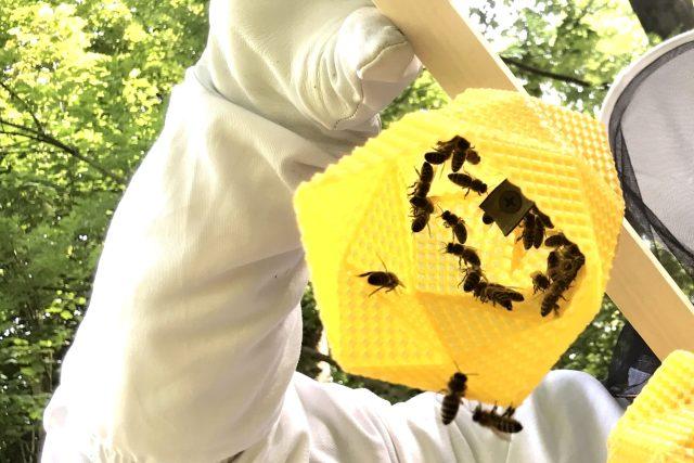 Včely pracují na výrobě designového svítidla | foto: Lucie Fürstová,  Český rozhlas