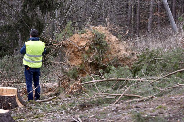 Státní podnik Lesy České republiky odhadl ztráty na zpeněžení dřeva zničeného orkánem Eberhard na přibližně půl miliardy korun.